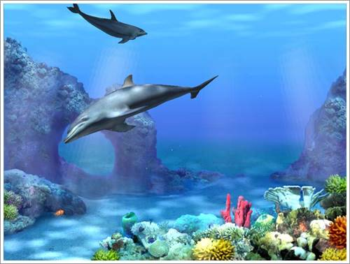Living 3D Dolphins Screensaver